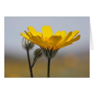 Desert Dune Sunflower Card
