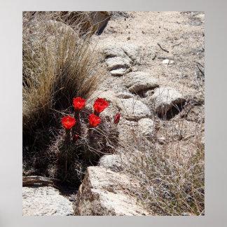 Desert Flowers, Joshua Tree National Park Print