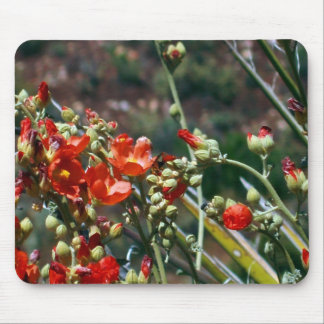 Desert Globemallow Flowers Mouse Pad