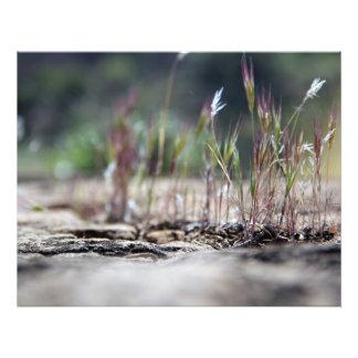 Desert Grass Photo Art
