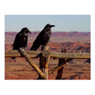 Desert Ravens Postcard