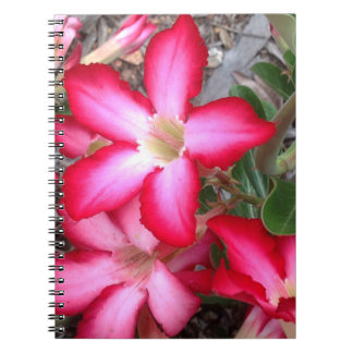 Desert Rose notebook