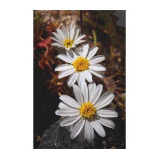 Desert Star Wildflowers Gallery Wrap Canvas