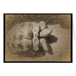 Desert Tortoise Blank Card