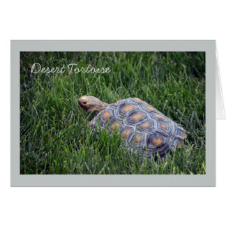 Desert Tortoise in Green Grass Greeting Card