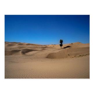 Desert Tree Postcard
