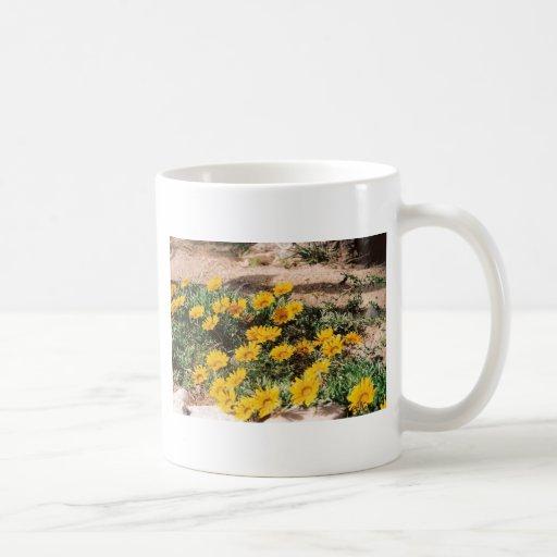 Desert Yellow Daisies Mug
