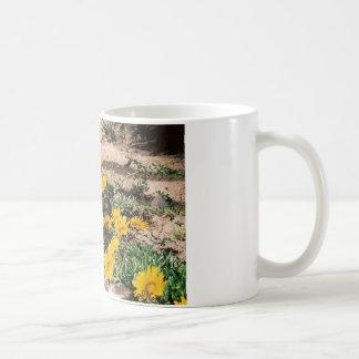 Desert Yellow Daisies Basic White Mug
