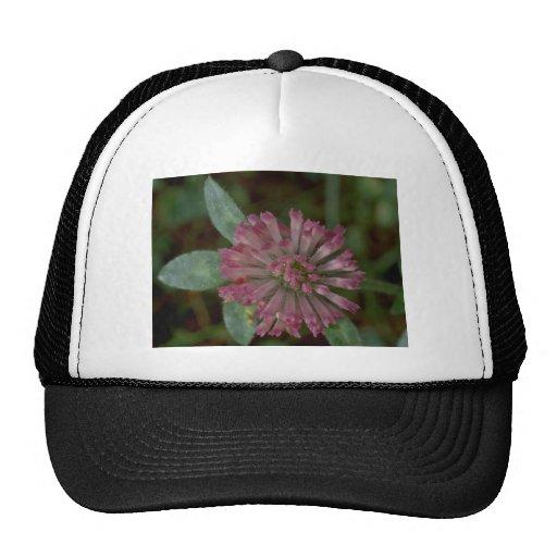 Designed Straws Trucker Hats