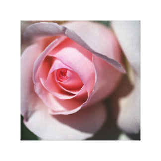 Designer Soft Pink And White Rose Wall Art