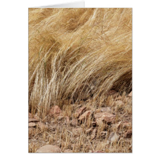 Detail of a teff field during harvest card