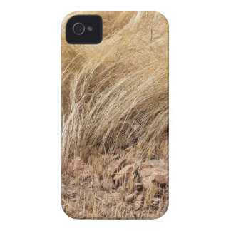 Detail of a teff field during harvest Case-Mate iPhone 4 cases