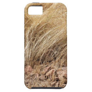 Detail of a teff field during harvest iPhone 5 cover