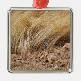 Detail of a teff field during harvest metal ornament