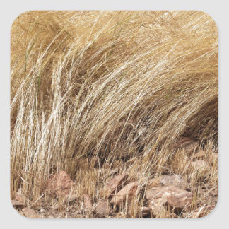 Detail of a teff field during harvest square sticker