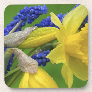 Detail of daffodil and hyacinth flowers. Credit Drink Coaster