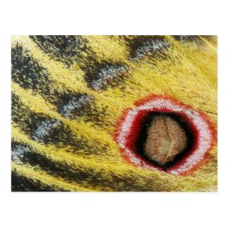 Detail Of Emperor Moth (Saturniidae) Wing Postcard