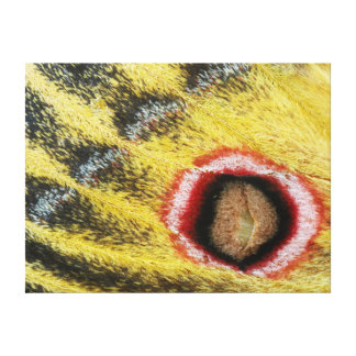 Detail Of Emperor Moth (Saturniidae) Wing Stretched Canvas Print