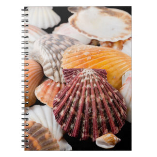 Detail Of Seashells From Around The World 2 Note Book