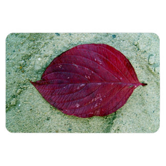 Detail shot Red autumn leaf laying on sand Vinyl Magnet