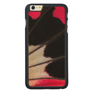 Detail Wing Pattern of Tropical Butterfly Carved Maple iPhone 6 Plus Case