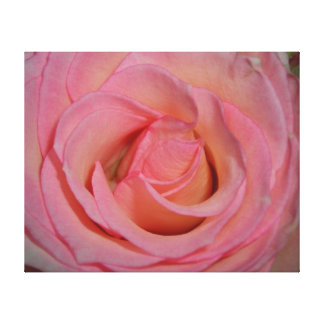 Detailed Pink Rose Canvas Print