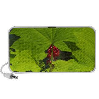 Devils Club in seed iPod Speakers