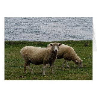Devon longwool sheep on remote south devon coast card