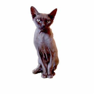 Devon Rex Cat Cut Out