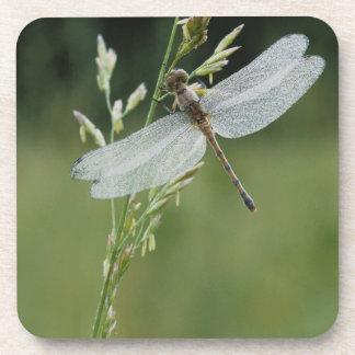 Dew covered Darner Dragonfly Coaster
