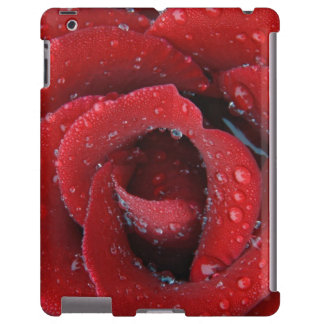Dew covered red rose decorating grave site in