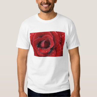Dew covered red rose decorating grave site in shirts