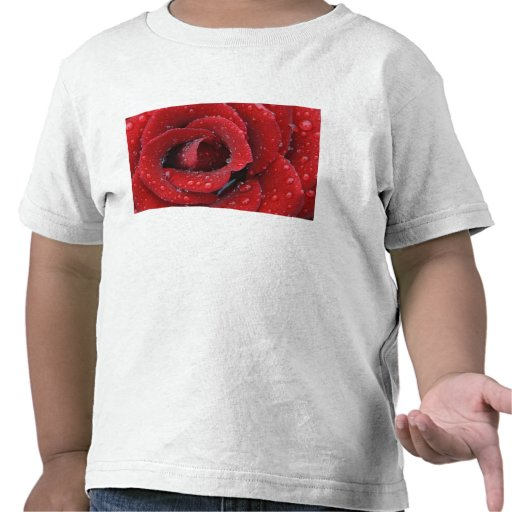 Dew covered red rose decorating grave site in tee shirt