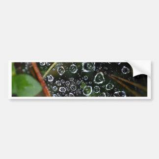 Dew drops in a spider net bumper sticker