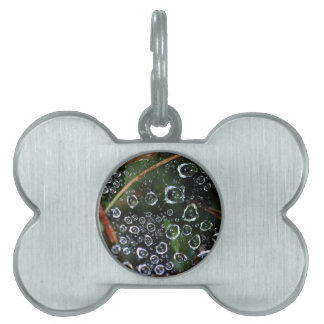Dew drops in a spider net pet tag