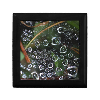 Dew drops in a spider net small square gift box