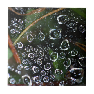 Dew drops in a spider net tile
