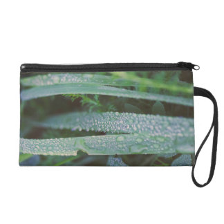 Dew drops in the grass wristlet