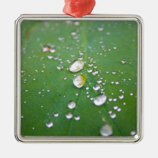 Dew Drops Metal Ornament