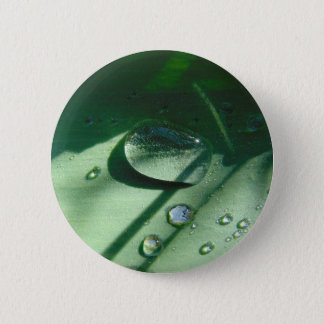 Dew Drops On A Tulip Leaf 6 Cm Round Badge