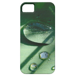 Dew Drops On A Tulip Leaf iPhone 5 Case