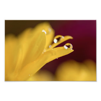 DEW DROPS ON A YELLOW DAISY by Michelle Diehl Art Photo