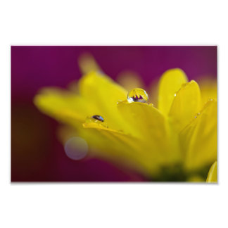 DEW DROPS ON A YELLOW DAISY by Michelle Diehl Photo Art