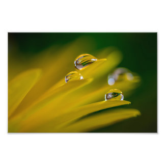 DEW DROPS ON A YELLOW DAISY by Michelle Diehl Photo Print