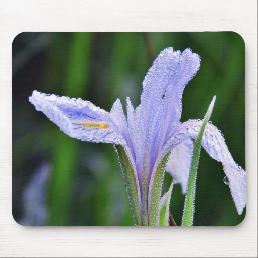 Dew Flowers 4 Mouse Pad