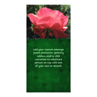 Dew Kissed Rose Photo Cards