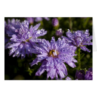 Dew on Aster Greeting Card