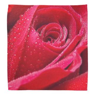 Dew on Red Rose Bandana