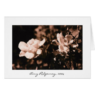 Dew on Roses Greeting Card