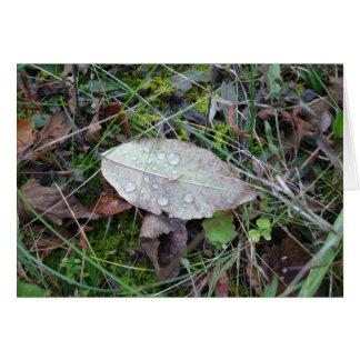 Dewdrop Leaf Custom Greeting Card